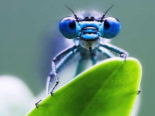 Mit Libellenaugen durch die Krise